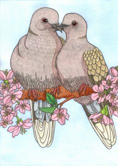 Collared Doves, illustration created for a private commission © Emma Cowley all rights reserved