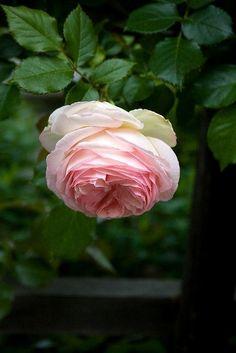 Dressing your truth. 4 энергии - Красота, вдохновленная природой