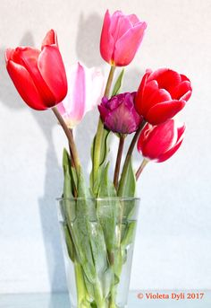 Vaso con i tulipani freschi