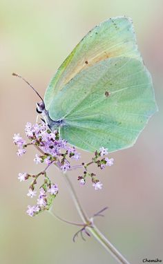 lilac & green ✿⊱╮