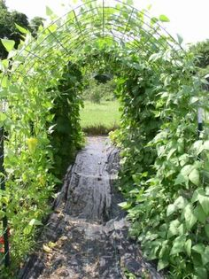 This year I will have a long row of arched fencing to grow my cukes, beans, gourds and other vining plants on. It will also create shade to plant lettuces in the shade of it. And fun for the kids and I to run under :) Bean Trellis, Wire Trellis, Arch Trellis, Grape Trellis, Cucumber Trellis, Trellis Ideas, Love Garden, Dream Garden, Shade Garden