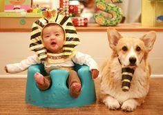 baby corgis - Google Search