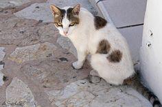 El tranquilón gato de Guadalest este verano.