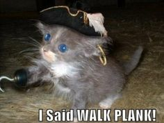 cats dressed like pirates *internet cats for the win!*