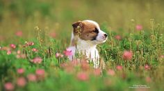 A Pup in Spring