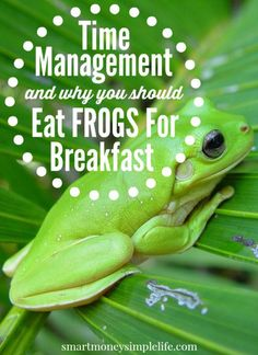 Time Management and Why You Should Eat Frogs for Breakfast   Effective time management is the foundation of a successful life. Saving money, making money, being more self-reliant, building your skills... all these things come together much more easily if you use your time efficiently. #TimeManagement #EatFrogsForBreakfast - Smart Money, Simple Life
