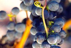 El concurso de vinos 'Tempranillos al mundo' bate récords de participación http://www.vinetur.com/2013102113674/el-concurso-de-vinos-tempranillos-al-mundo-bate-records-de-participacion.html