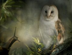 The Owl Looked at Brian Kindly by Polly470. Hauntingly Beautiful.