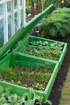 Châssis froid avec toit ouvert aux jeunes légumes