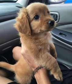 Watch funny and cute dogs and puppies as they are the most lovable pets in the world. Cute Dogs And Puppies, Baby Dogs, I Love Dogs, Doggies, Adorable Puppies, Pictures Of Cute Puppies, Cute Pups, Cool Dogs, Cute Animals Puppies
