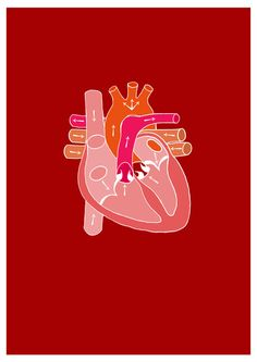 heart diagram, Emma J Hardy
