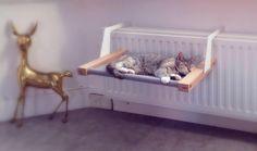 RENE Amaca/letto per design olandese gatti Made in