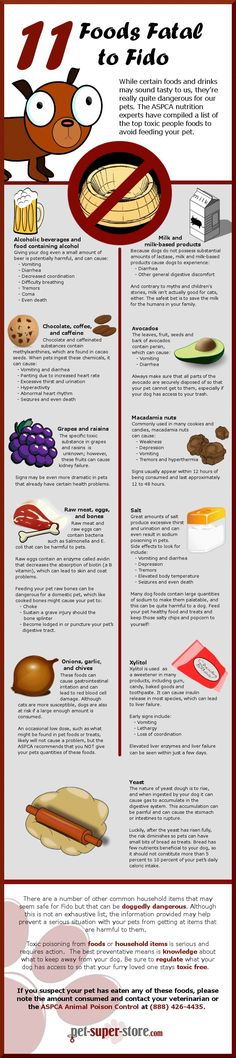 11 Foods Fatal to Dogs