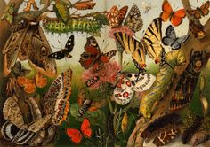 Butterflies and Moths  Antique Chromolithograph by carambas