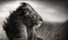 #Lion #Inspiration #UnityByRastaEmpire