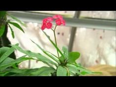You at the Zoo- Plant Adaptations.  How plants defend themselves against animals and people.