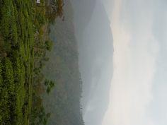 Glenburn Tea Estate, India