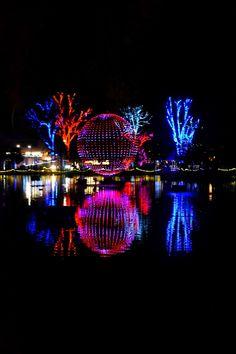 Phoenix Zoo Lights   DETTE CAKES