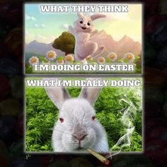 Happy Easter for Stoners Pics Easter Bunny Images, Funny Easter Bunny, Easter Pictures, Happy Easter, Funny Weed Memes, Weed Humor, Cannabis, Bunny Meme, Tatuajes