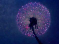 disney fantasia dandelion