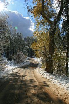 Beautiful snowy forest Prescott Az