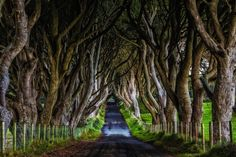 The Famous Dark Hedges if Northern Ireland. When we made it to the Dark Hedges j… Dark Hedges Ireland, Voyager Loin, Blog Voyage, Filming Locations, Ireland Travel, Ireland Vacation, Travel Abroad, Northern Ireland, Land Scape