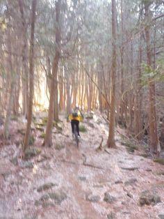 Sun coming through the trees, Ridge trail Hilton Falls, January 2, 2015