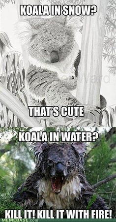 This LITERALLY made me laugh out loud. BAHAHAHA. But really... dont kill koalas... even wet ones.