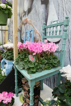 cyclamen styled with vintage look