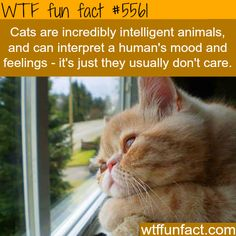 Cats don't care about how you feel - WTF fun facts