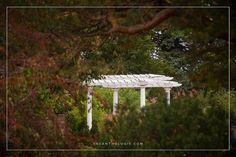 White Wedding Pergola on the Grand Promenade at The Gardens of Castle Rock #TheGardensofCR #MNWedding ~ Love Grows at The Gardens of Castle Rock ~ The Minnesota Wedding Venue & Event Center #LoveGrowsatTheGardens #MinnesotaWeddingVenue #MinnesotaWedding #MNVenue #GardenWedding #OutdoorWedding Photo by @theanthologie