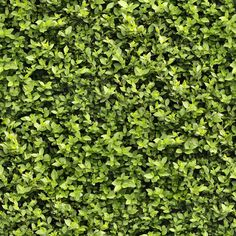 Seamless Hedge Texture by on DeviantArt - Modern Plant Texture, Green Texture, Leaf Texture, Texture Design, Dirt Texture, Game Textures, Textures Patterns, Autocad, Ceiling Texture Types