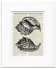 sea shells IV print