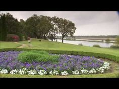 Charleston Plantations
