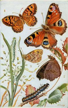 Vintage Illustration Butterfly press out card - process developed by Raphael Tuck Butterfly Illustration, Nature Illustration, Retro Illustration, Peacock Butterfly, Vintage Butterfly, Insect Art, Nature Prints, Grafik Design, Gravure