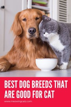 Dog Breeds That Are Typically Good With Cats. These are loyal, patient, and low-key dogs. Beagles were bred to hunt in packs, so they are typically friendly with other animals. breeds of dogs Best Cat Breeds, Dog Breeds List, Cute Cat Breeds, Beagle, Diy Cat Tent, Dog Breeds That Dont Shed, Dog Breed Info, Dangerous Dogs, Medium Dogs