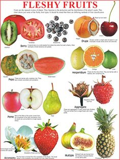 is squash a fruit fruits for weight loss