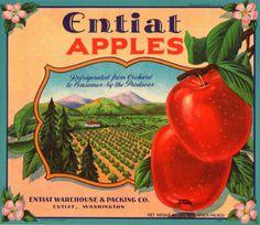 Vintage Label | Eniat Vintage Apple Crate Label Entiat Washington