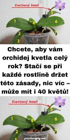 Orchidej je poměrně náročná květina na pěstování, co umí většina pěstitelů. Někteří pěstitelé však ovládají tajemství, díky kterým jim orchideje rozkvetou do krásy klidně iv lednu. Poradíme vám proto tipy a triky zkušených pěstitelů, které pomohou i vám. Co je třeba vědět na začátek? Kdy třeba orchideu prosadit? Orchidej netřeba přesazovat každý rok. Orchidej nepotřebuje klasickou zeminu, […] The post Chcete, aby vám orchidej kvetla celý rok? Stačí se při každé rostlině držet tét Gerbera, Orchids, Homemade, Flowers, Plants, Tulips, Home Made, Plant, Royal Icing Flowers