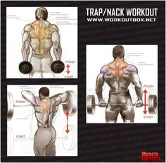 Trap Workout.. The exercise on the right. Never seen it. Hmmm
