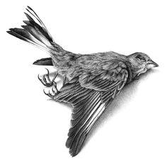 Vogelillustration, Tuschezeichnung Vogel, Tierillustration