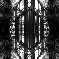 Jaula de Palmeras. 4/4. Carlos De Vasconcelos. CMDVF. #CarlosDeVasconcelos #CMDVF #Diseño #Ilustración #Arte #Artista #BlancoyNegro #Jaula #Palmera / #Design #Illustration #Art #ArtWork #Artist #BlackAndWhite #bw #bnw #Cage #Palm Black And White, Illustration, Design, Palm Trees, Blanco Y Negro, Artists, Art, Illustrations, Design Comics