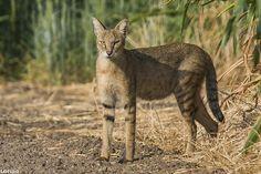 gatos-selva-16