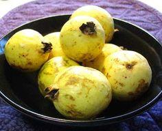 ¿Sabías que la guayaba es una de las frutas más nutritivas que existen?  Te damos unas buenas recetas para emplearla.  // Did you know that guava is one of the most nutritious fruits of all?  We have a few very good recipes in which to use it.