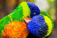 Amor lindo e colorido