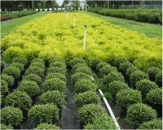 New Life Nursery-wholesale plant supplier Bridgeton NJ -Serving clients from New England and throughout the Mid-Atlantic States. www.facebook.com/newlifenurseryinc Call 856-455-3601 Wholesale Plant Nursery, Mid Atlantic States, Wholesale Plants, New Life, New England, Vineyard, Facebook, Outdoor, Outdoors