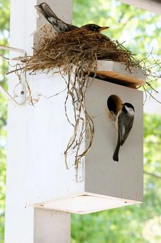 Unusual Bird Nests
