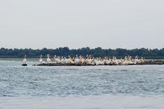 Partizani, Delta Dunării: Pelicani Danube Delta, San Francisco Skyline, Beach, Water, Travel, Outdoor, Gripe Water, Outdoors, Viajes