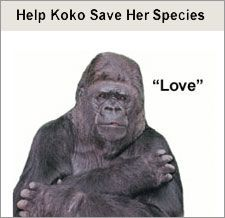 """Koko signs """"Love""""---If you have never heard of or seen Koko in action.....take a minute to check her out......she can use and understand over 1,000 words and is truly a remarkable  living being and she is a great kitty mom. Makes you think about what you say to animals and what they are capable of understanding and learning!"""