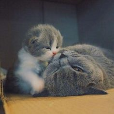Little Kiss/Lotta love :)